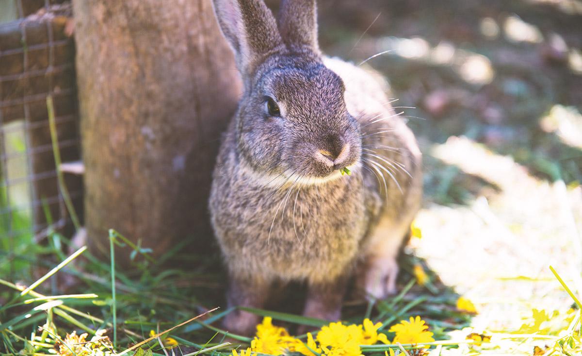 petting conigli-almdorf